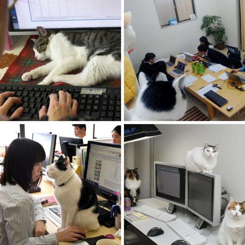 Journée du chat : chat travaille !